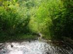 sinking creek wetlands project(10)