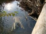 sinking creek wetlands project(15)