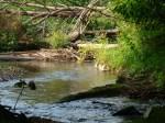 sinking creek wetlands project(17)