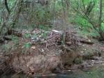 sinking creek wetlands project(20)