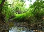 sinking creek wetlands project(21)