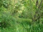 sinking creek wetlands project(22)