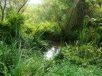 sinking creek wetlands project(23)