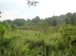 sinking creek wetlands project(25)