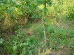 sinking creek wetlands project(35)