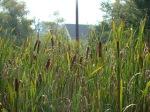 sinking creek wetlands project(39)
