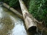 sinking creek wetlands project(42)