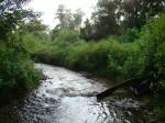 sinking creek wetlands project(44)
