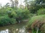 sinking creek wetlands project(59)