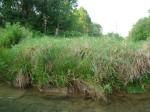 sinking creek wetlands project(60)