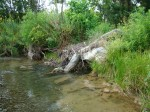 sinking creek wetlands project(61)
