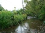 sinking creek wetlands project(62)