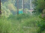 sinking creek wetlands project(64)