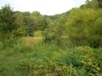 sinking creek wetlands project(65)