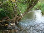 sinking creek wetlands project(69)