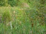 sinking creek wetlands project(72)