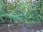 sinking creek wetlands project(73)