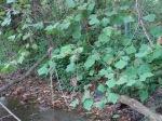 sinking creek wetlands project(79)