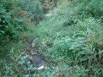 sinking creek wetlands project(81)