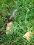 sinking creek wetlands project(82)
