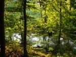 sinking creek wetlands project(86)